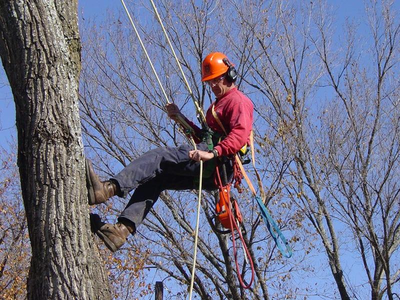 Arborist Services in Edmonton